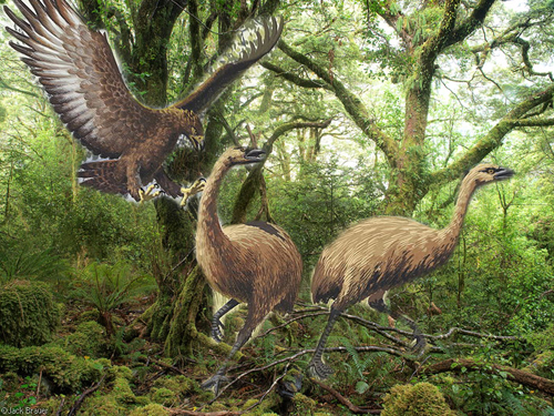 EZEKIEL 31 truth : Haast's Eagle - South Island New ...