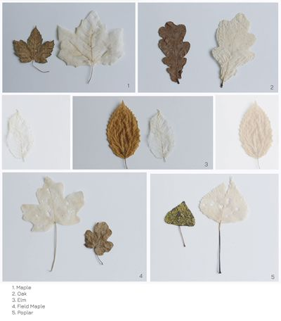 Leaves types.jpg