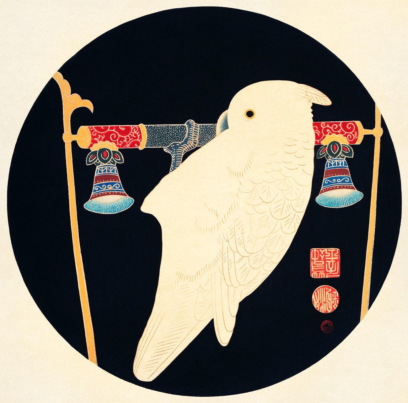 A White Macaw.